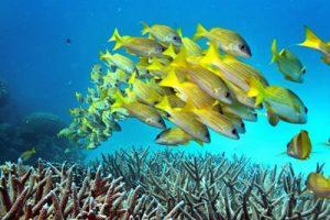 pesci colorati delle Maldive